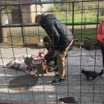 Labie darbi dzīvnieku patversmē 2