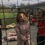 Labie darbi dzīvnieku patversmē - meitenes